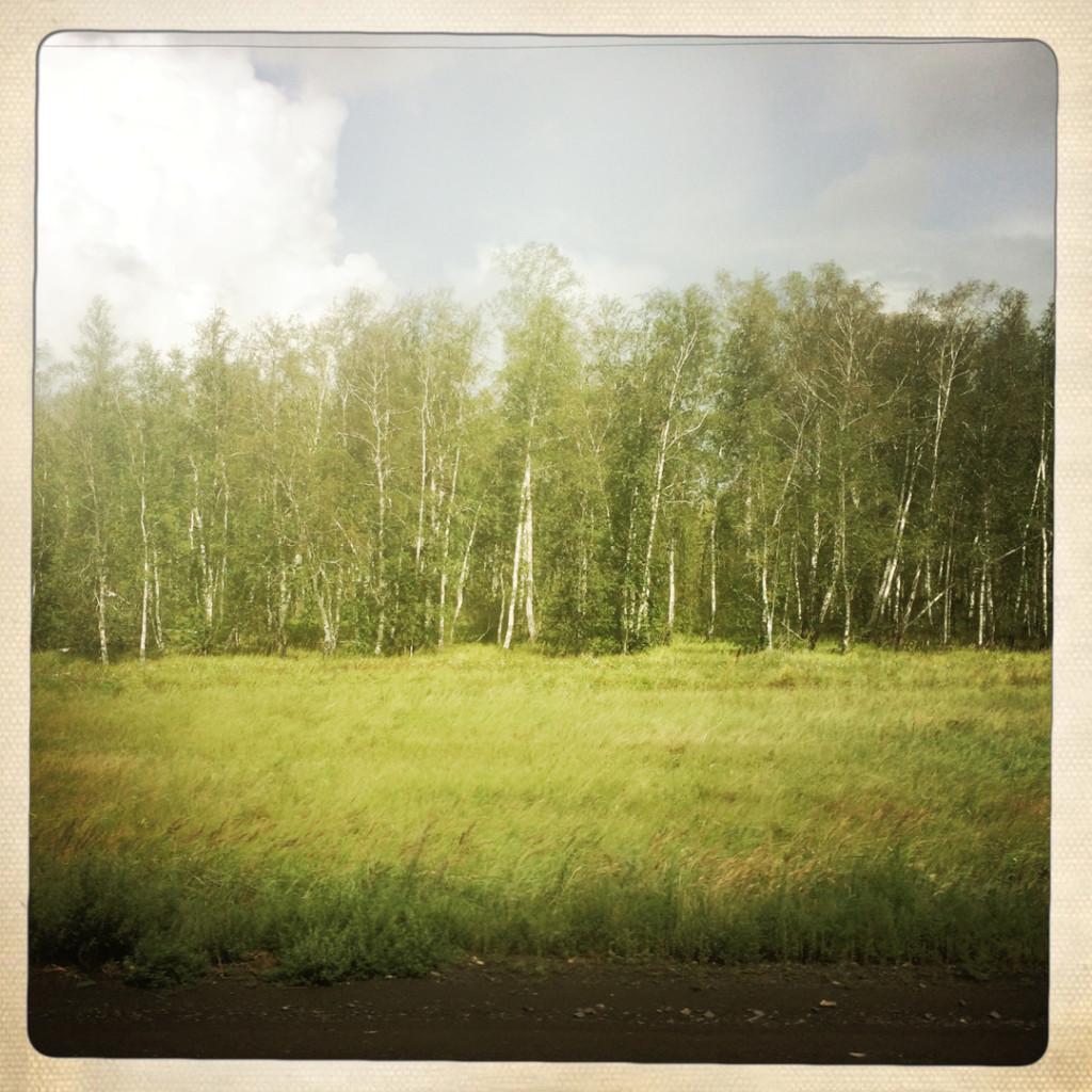 Birkenwälder
