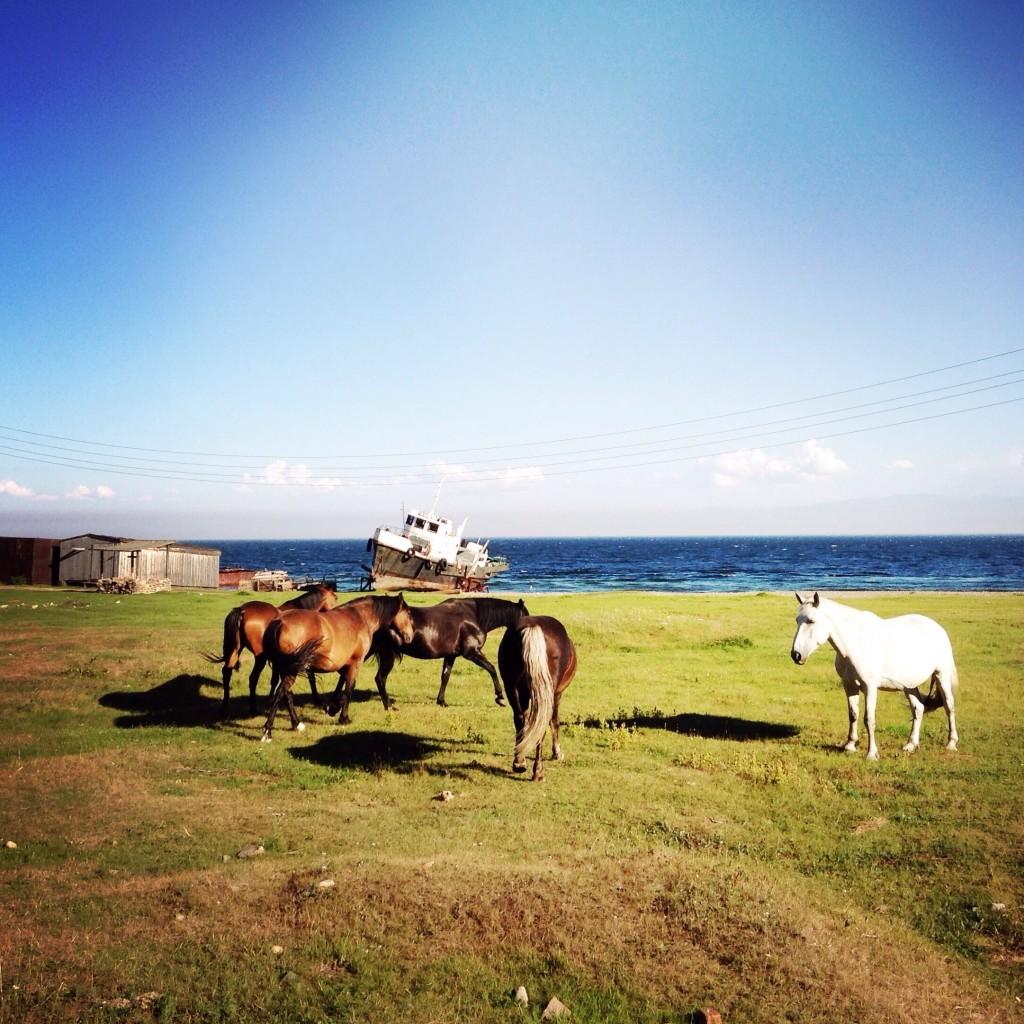 Pferde am Baikalsee