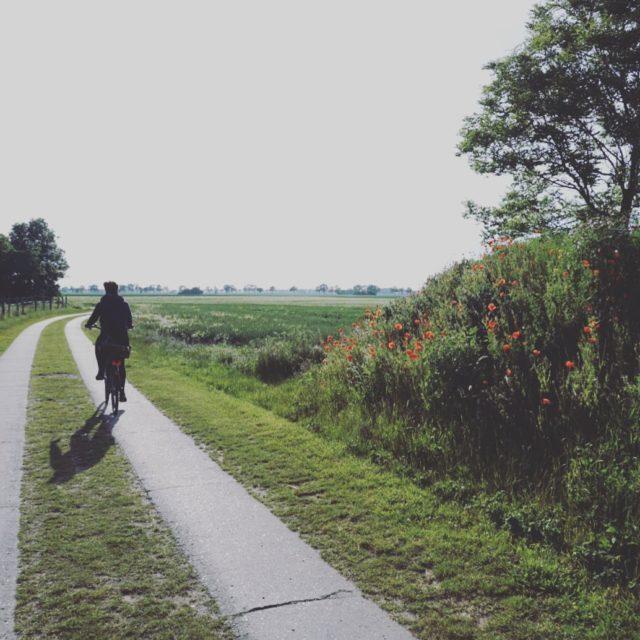 Auf der Suche nach Sommerblumen cycling instatravel travelgram travel rgenhellip